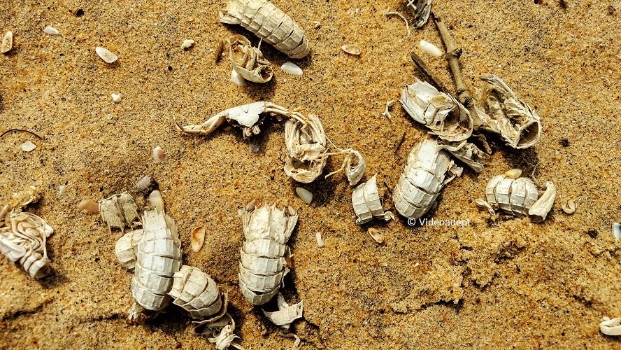 Prawn shells