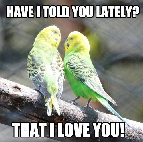 Sweet Love Memes 5