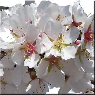 badem fındık kavrulmuş tuzlu gıda kuruyemiş çiçek yaprak bitki tuzlu fındık atıştırmalık  snack sağlıklı beslenme  madde yenilebir yaağlar