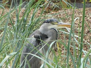 Bird Zoo Dublin