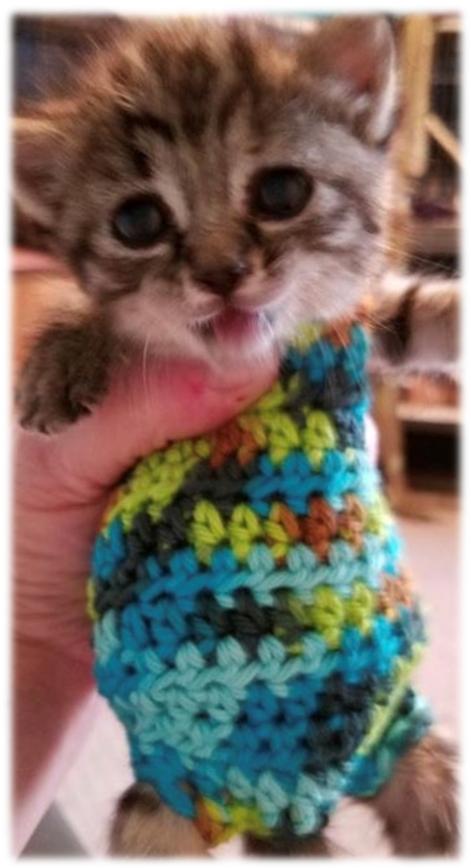 Adventures In Stupid Pinterest Orphaned Kitten Sweaters