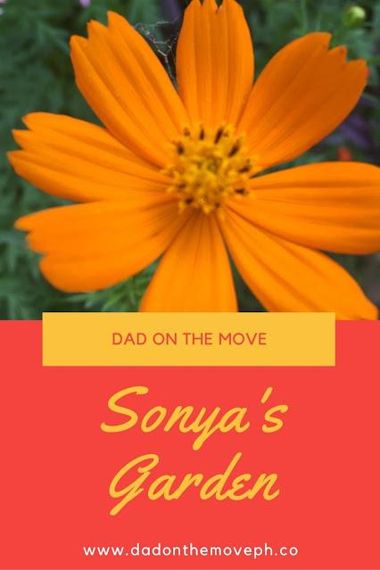 Sonya's Garden review