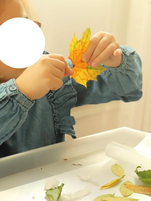 activité avec des feuilles mortes