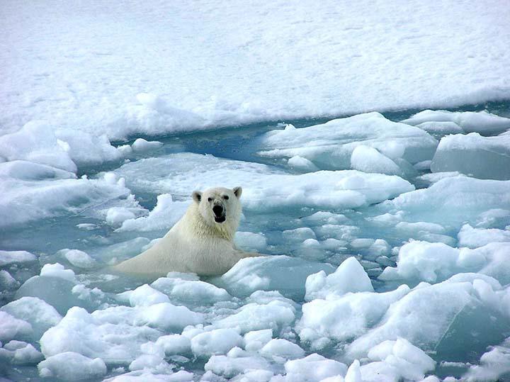 kış resimleri ve kutup ayıları