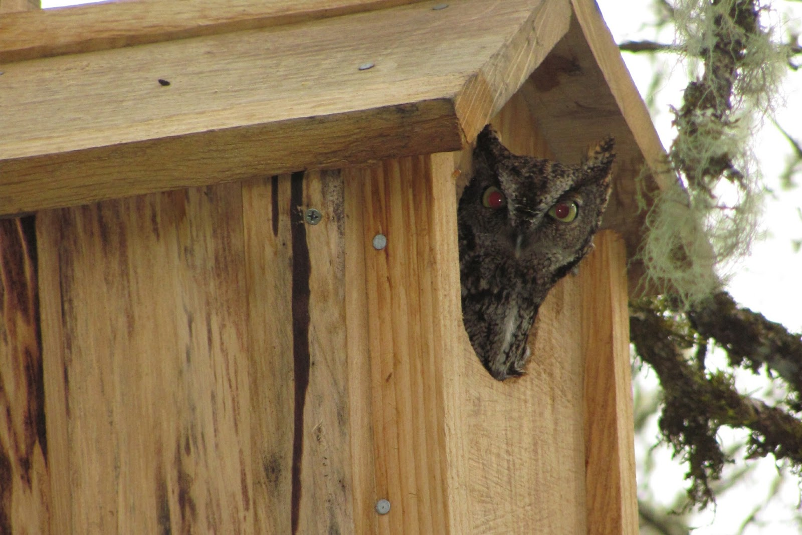 The good life: Bird houses and owls
