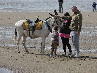 a donkey on blackpool beach