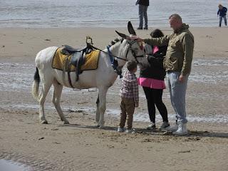 a donkey on blackpool beach