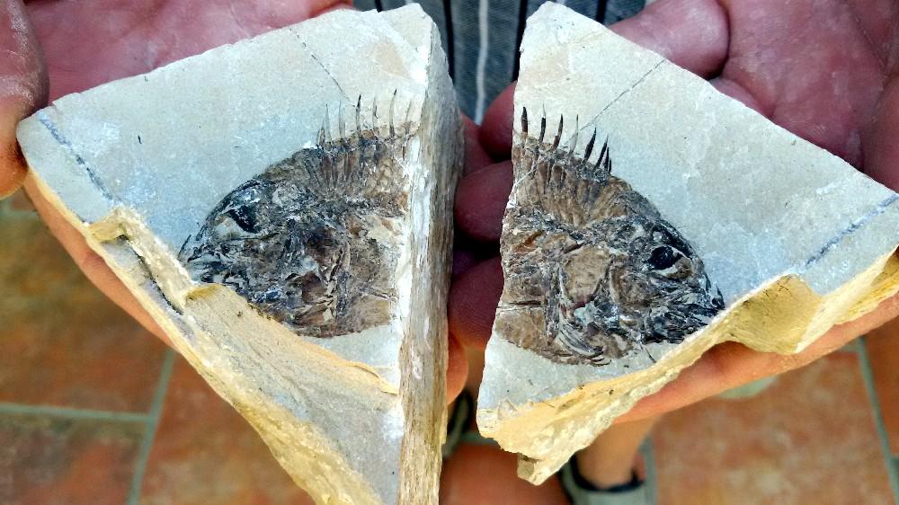 Una visita al museo dei fossili di Bolca e Pesciaria: alla ricerca di un mare antico milioni di anni