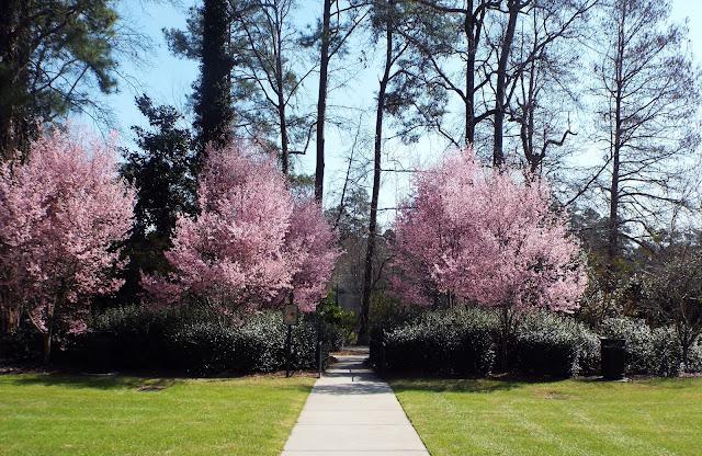 Swan Lake Iris Gardens Sumter South Carolina