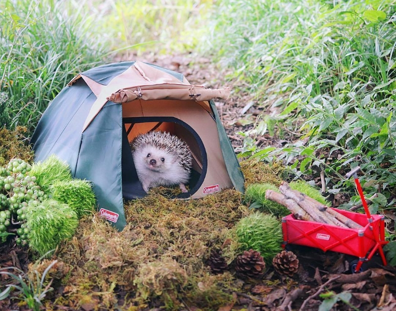как выбрать палатку