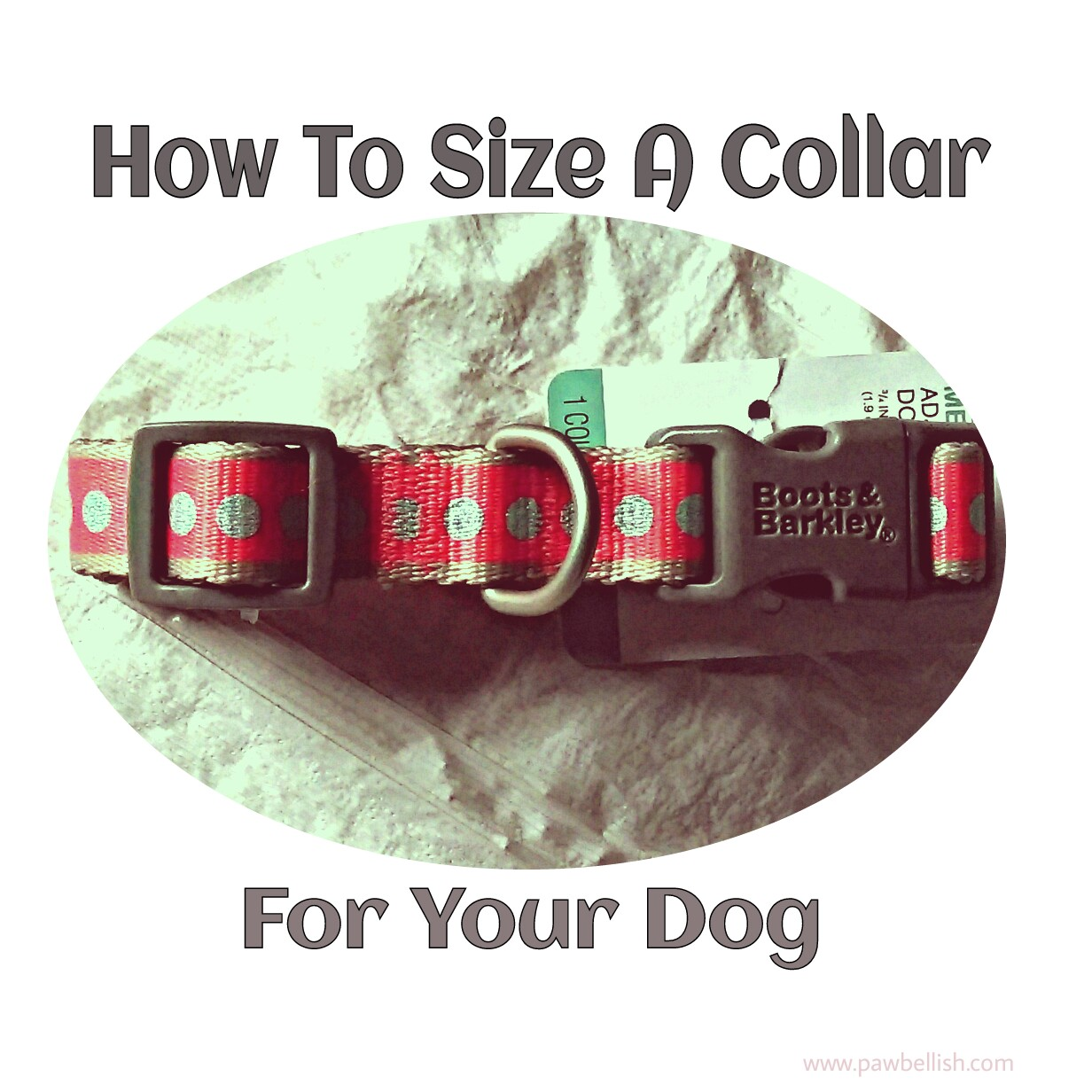 Picture of a snap style dog collar