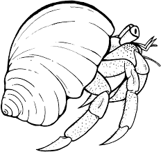 Hermit Crab Coloring Page For Kids