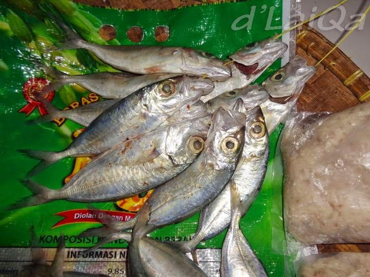 ikan lolong