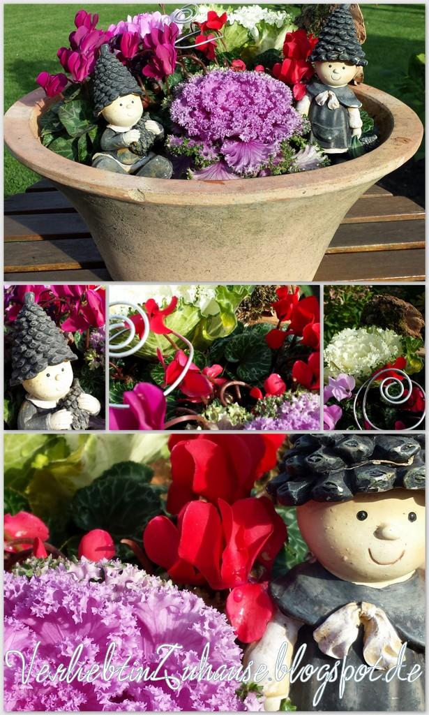 Herbst-Dekoration im Garten mit Alpenveilchen und Zierkohl