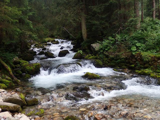 Potok Bystra w dolnej części szlaku