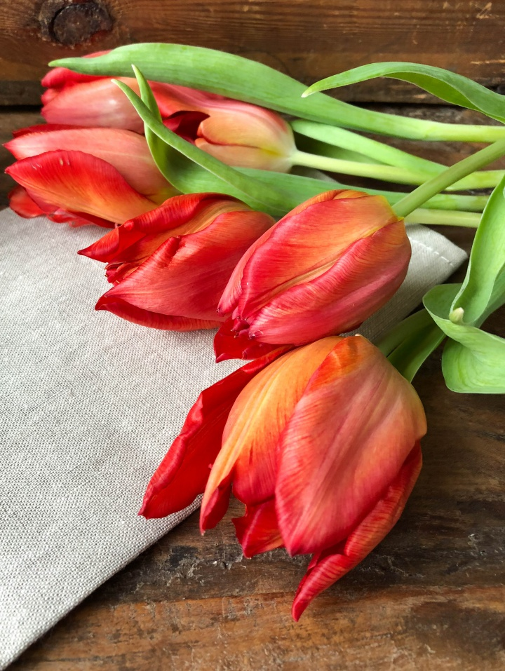 Red Tulips to welcome spring