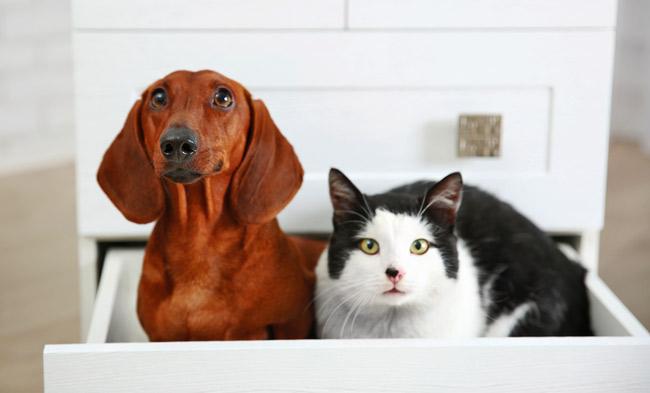 Bayer Foresto obroża dla psów i kotów