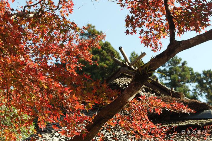 toit pavillon de thé de Kunenan, momiji, Kanzaki, Saga