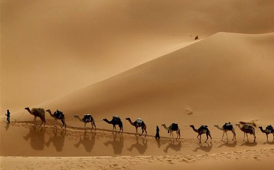 """Gurun Arabia"""