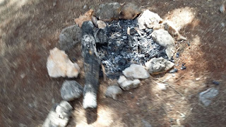 Hoguera en los pinos de Gilena