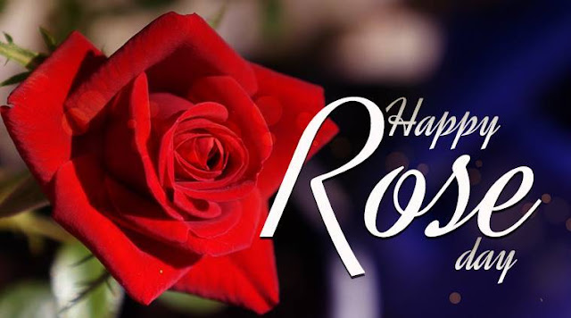 Love Images for Rose Day 2019