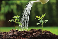 Avoid watering in the evening