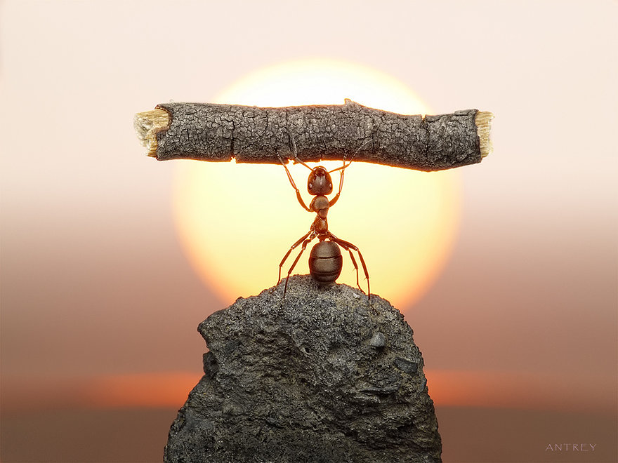 07-Statue-of-Labour-Andrey-Pavlov-Photographs-of-Ants-an-Affordable-Journey-to-a-Parallel-World