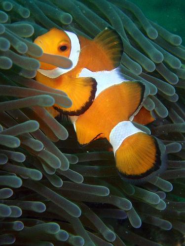 Los científicos estiman que desconocemos al menos un tercio de las especies marinas