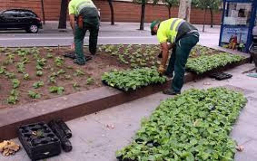 L ajuntament de barcelona convoca 24 places d auxiliars de for Empresas jardineria barcelona