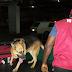 NDLEA apprehends airport cartel planting drugs in passengers' luggage