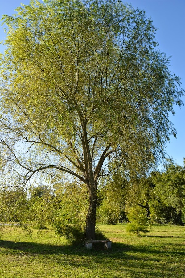 Raíces, tallos, esquejes de árboles y arbustos.