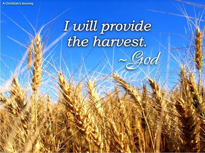 God gives the harvest
