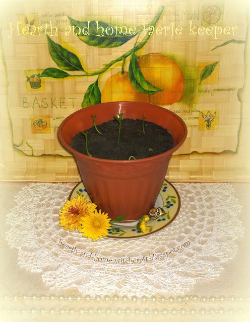 Тропический рай в домашних условиях: выращиваем лимон из косточки