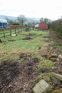 Our orchard at Pig Row in 2011.