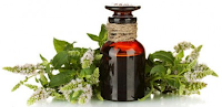 minyak pohon teh dapat membuat kulit menjadi halus