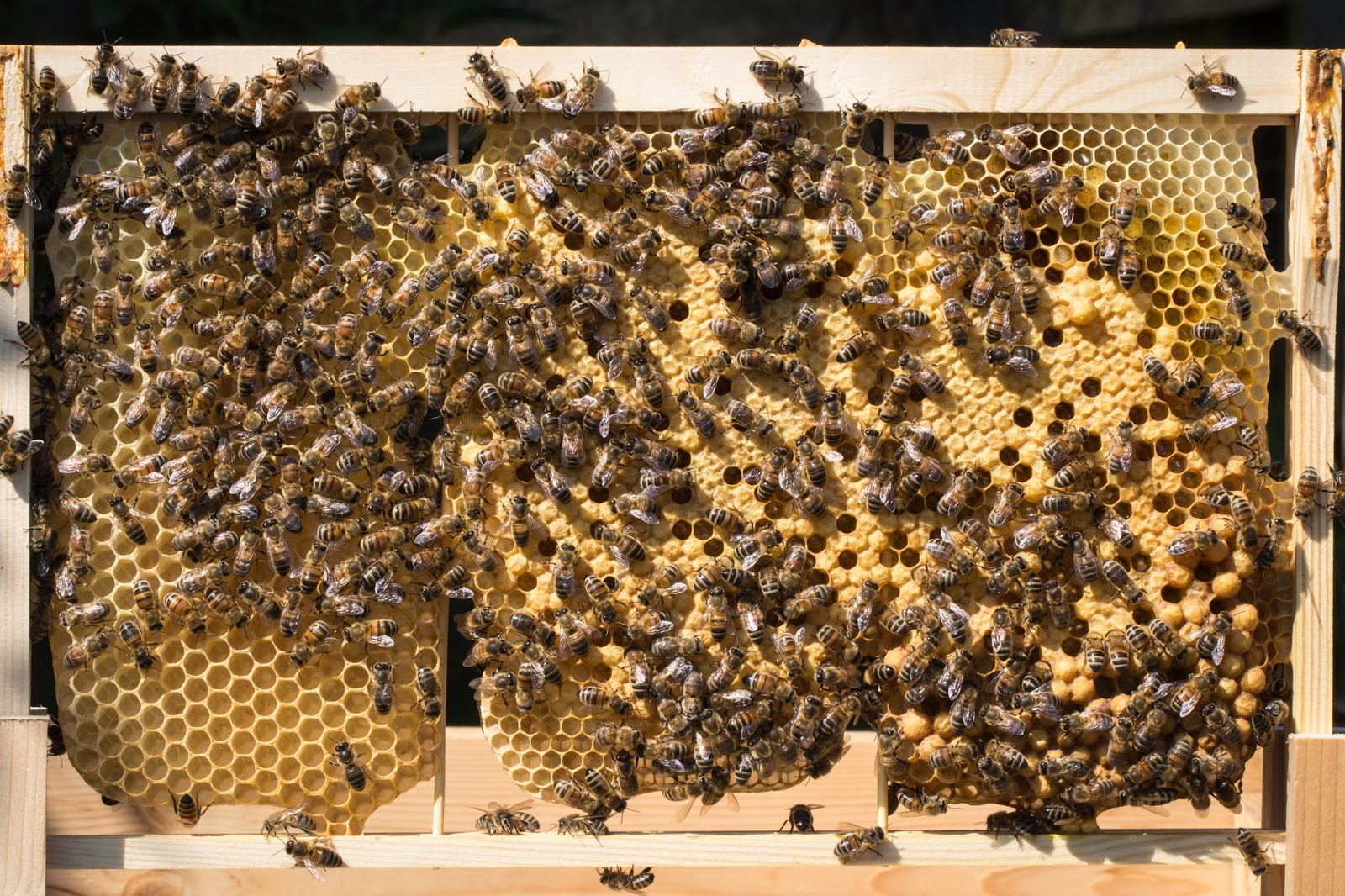 Trogtrogbee Foundationless Frames Wiring Board Bee A Couple Of Important Points From David Evans Advice The Hive Must Be Perfectly Horizontal If Are Not Vertical Bees Will Build Comb