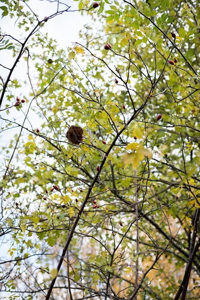 nido árbol