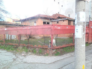Lonely Dog, Derelict, Yambol, House,