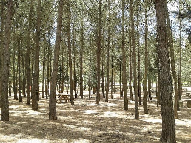 Área de Picnic de la ermita cerca de Manjavacas