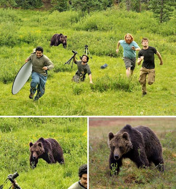 Beruang Mengejar Fotografer Geografis Nasional