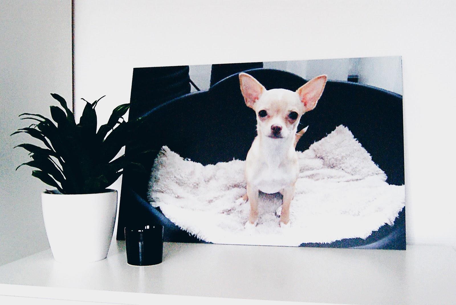 Een foto van onze hond op canvas