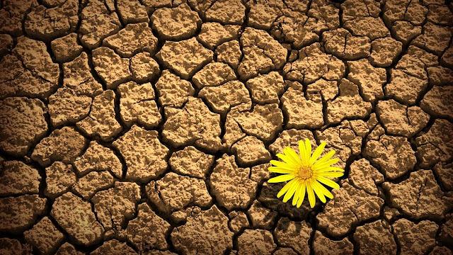 Αποτέλεσμα εικόνας για Έκχαρτ Τόλλε: Όσο πιστεύεις ότι η ζωή δεν πρέπει να είναι δύσκολη, θα υποφέρεις