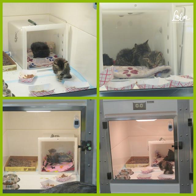 Best Friends Animal Society Best Friends Pet Adoption Center NYC