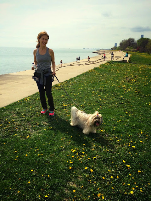 To Dog With Love Chicago Dog Walk In Lincoln Park At