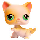 Littlest Pet Shop Small Playset Cat Shorthair (#73) Pet