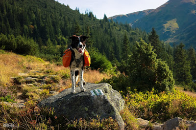 Ruffwear dog pack on a border collie in the High Tatras