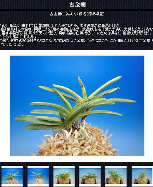 http://www.fuuran.jp/jiman_kokinnran.html