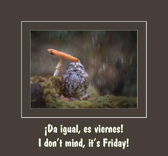 tiny-owl-under-mushroom