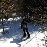 raquetteuse, forêt, hiver, neige, raquette
