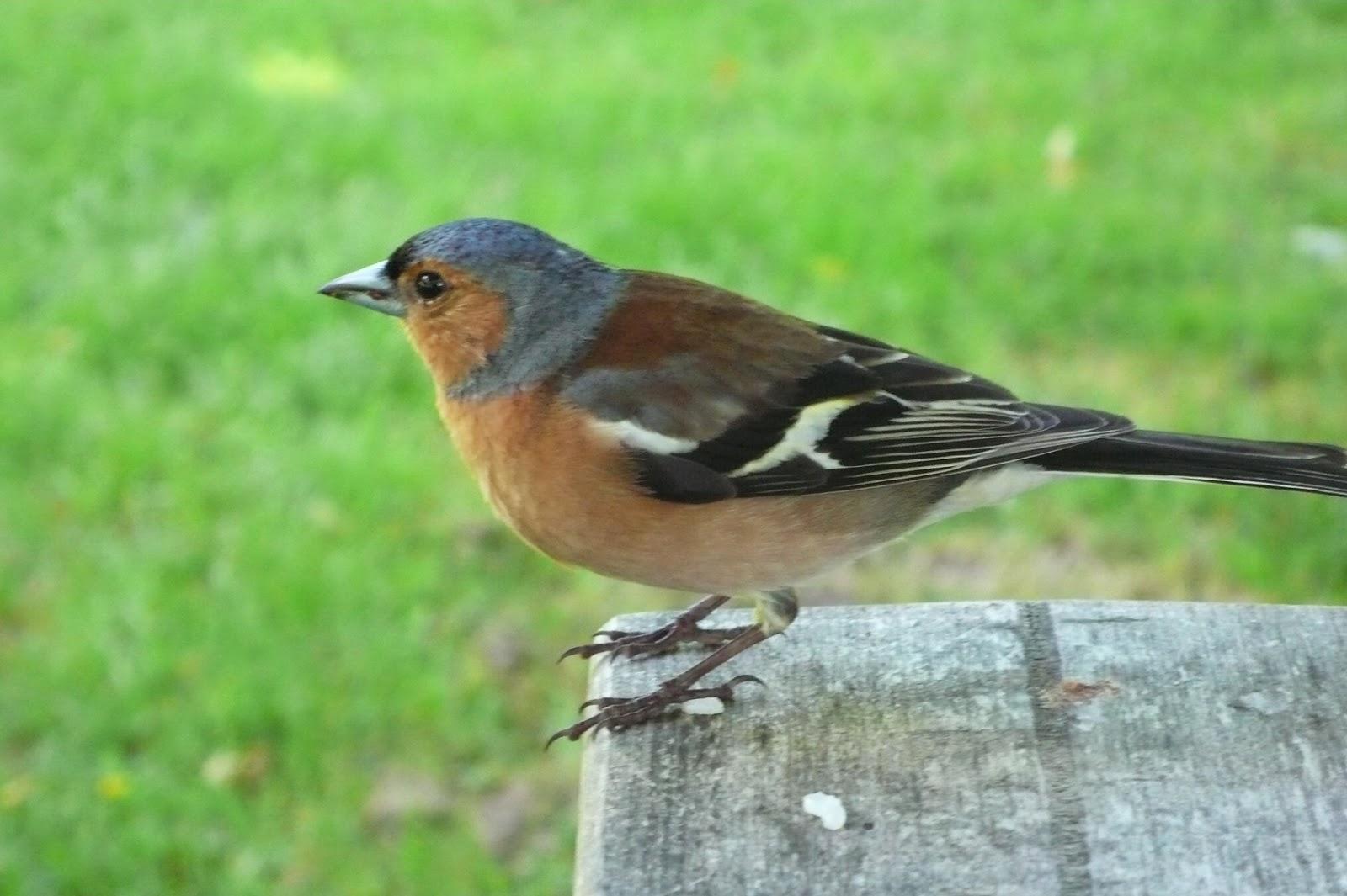 庭に鳥が巣を作り始めてるー… : 心や体の悩み : 発 …